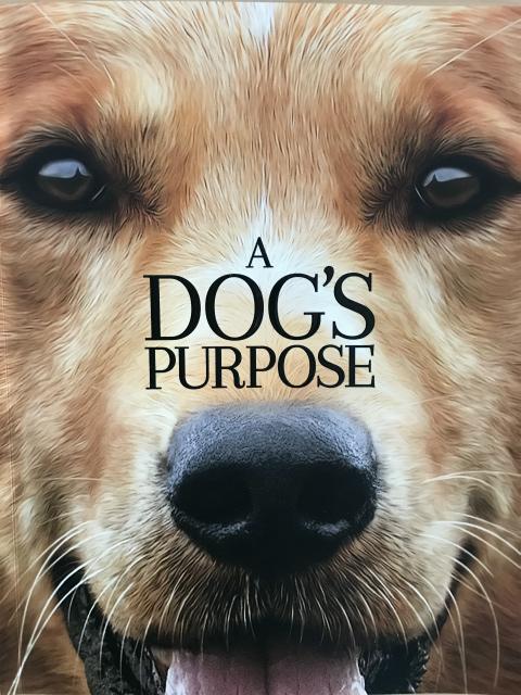 映画「僕のワンダフル・ライフ」感想 犬が教えてくれる深い愛情に感動